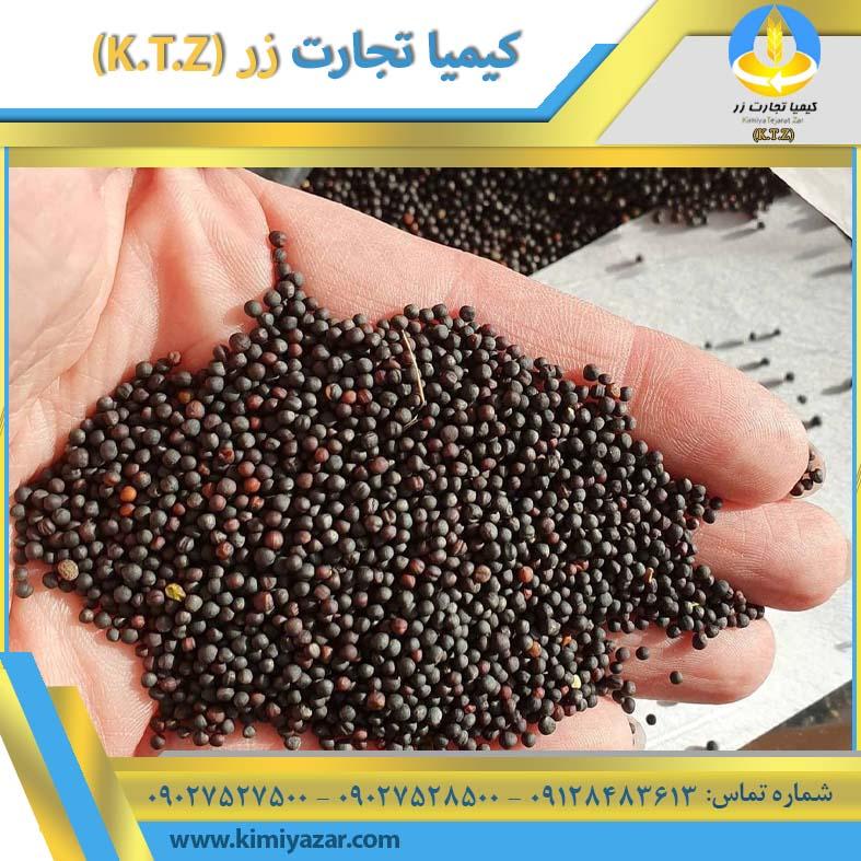 دانه کلزا اصفهان