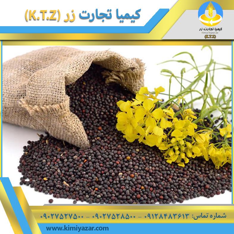 دانه کلزا کرمان