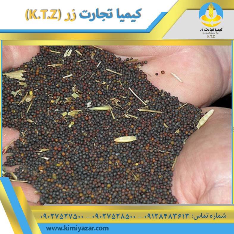 دانه کلزا خوزستان